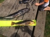 Greenling 17 thumb