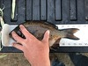 Doty perch thumb